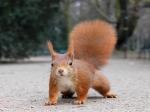 3o-wallpaper-do-ano-esquilo-vermelho